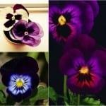 Typy urody jak kwiaty